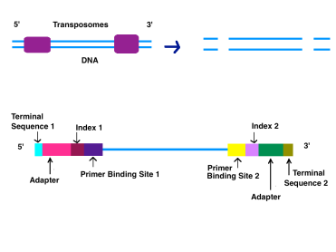 DNA_Processing_Preparation.png